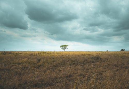 Základová fotografie zdarma na téma Afrika, bouře, denní světlo