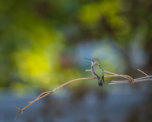 Fotobanka sbezplatnými fotkami na tému denné svetlo, divočina, divý