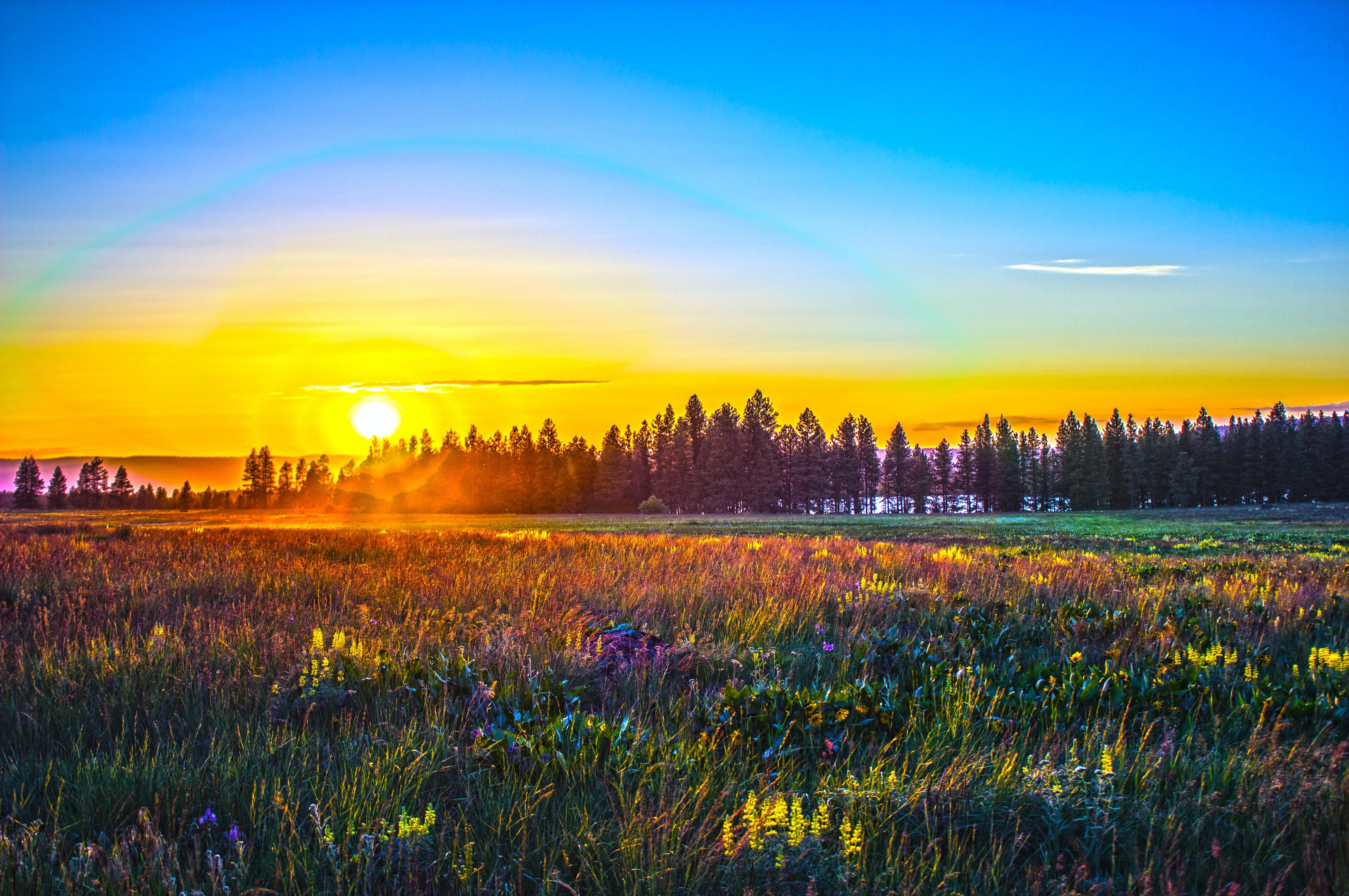 Free stock photo of blue, evening, evening sun, field