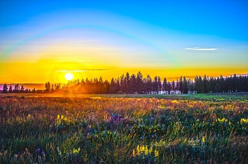 ağaçlar, akşam, akşam Güneşi, alan içeren Ücretsiz stok fotoğraf