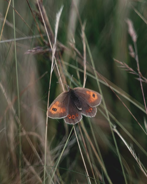 Brown and Black Butterfly on Green Grass