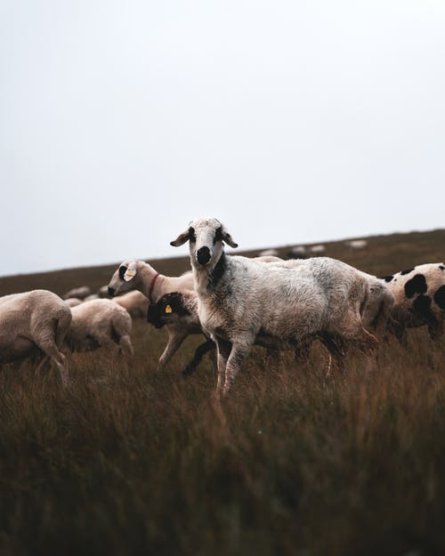 Free stock photo of agriculture, animal, animals
