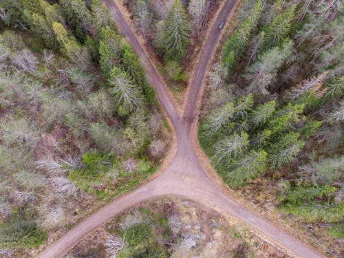 Bird's Eye View of Green Trees Near A Country Road