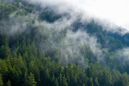 Photo Of Green Trees On A Foggy Day