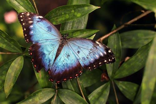 Ingyenes stockfotó gerinctelen, pillangó, rovar, természet témában