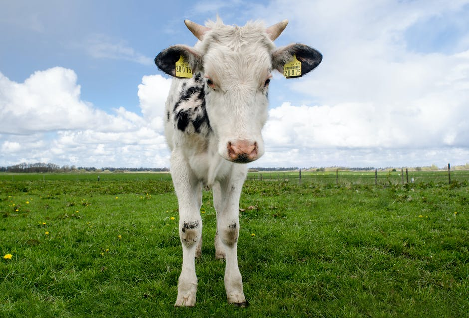New free stock photo of field, animal, farm