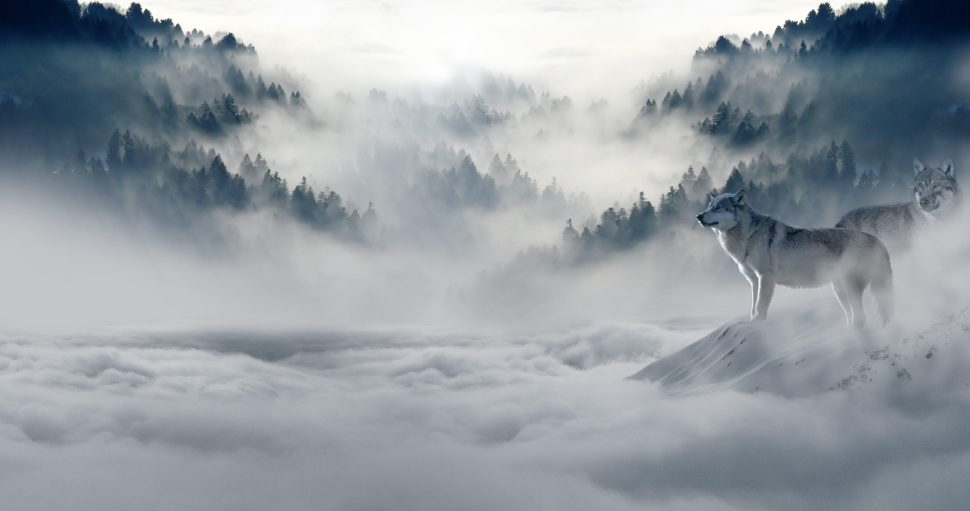 Základová fotografie zdarma na téma divoké zvíře, HD tapeta, hora, mlha