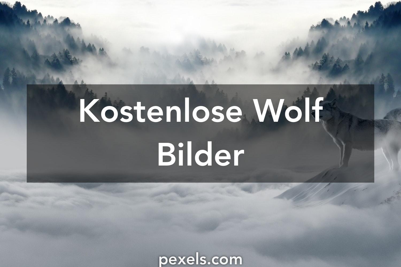 40 Wolf Fotos Pexels Kostenlose Stock Fotos