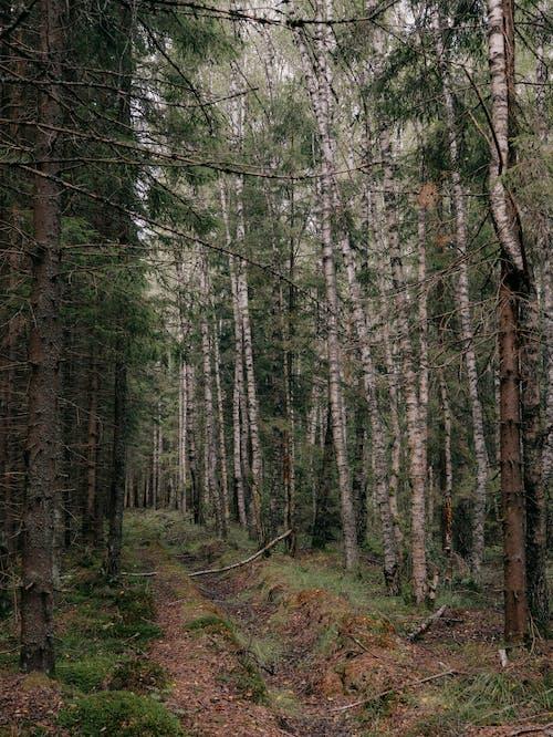 Kostenloses Stock Foto zu äste, badehose, bäume