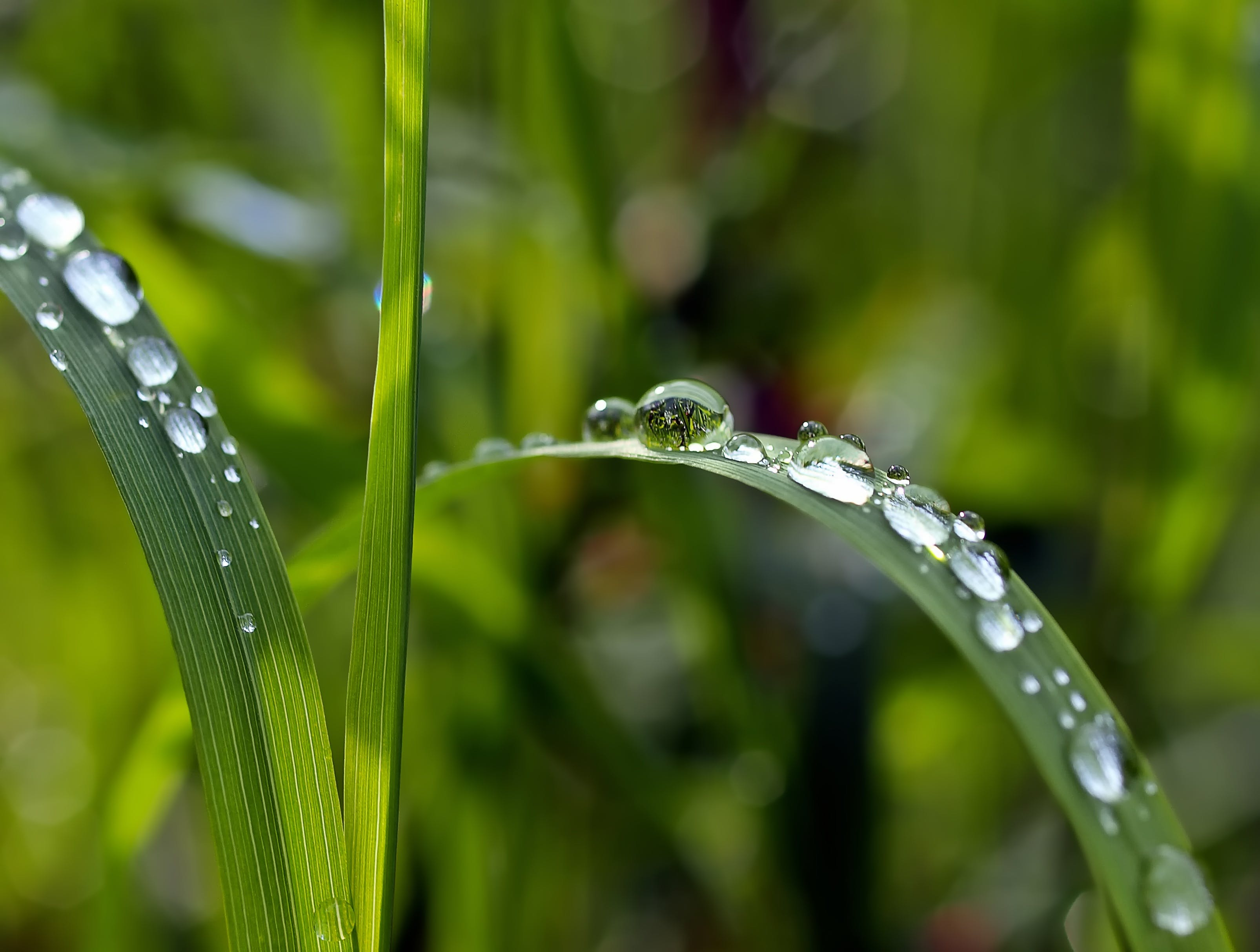 Macro Photography of Watered Green Leaf Plant
