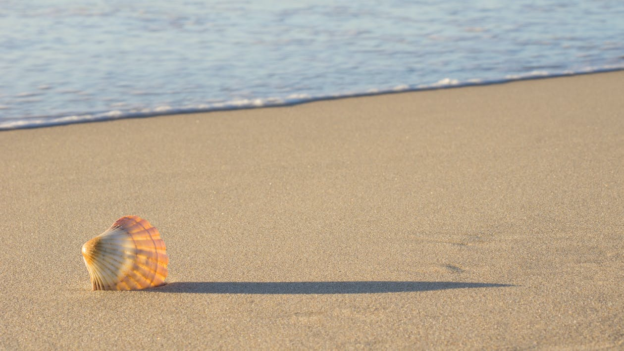 Fotobanka sbezplatnými fotkami na tému Austrália, mušľa, oceán