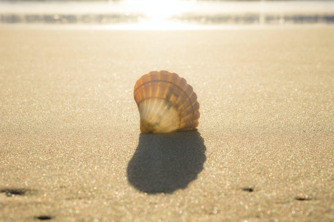 Základová fotografie zdarma na téma austrálie, Gold Coast, lastura