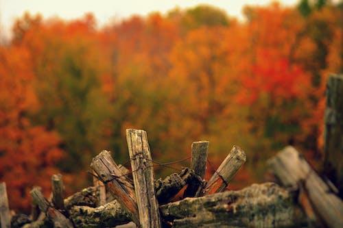 まき, 木, 木材, 森の中の無料の写真素材