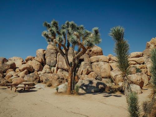 Photos gratuites de cactus, cailloux, californie