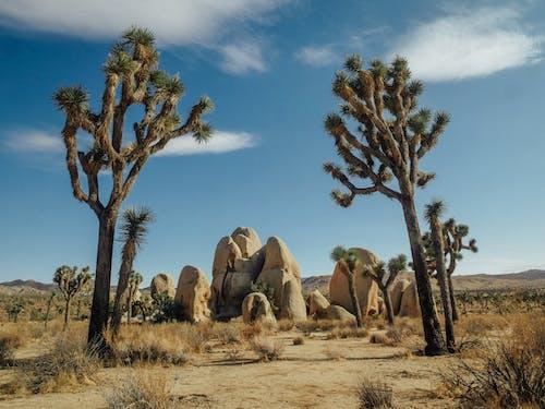 açık hava, Birleşik Devletler, çevre içeren Ücretsiz stok fotoğraf