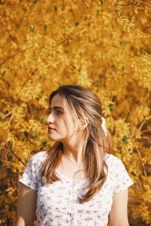 Fotos de stock gratuitas de alegría, árbol, bonita