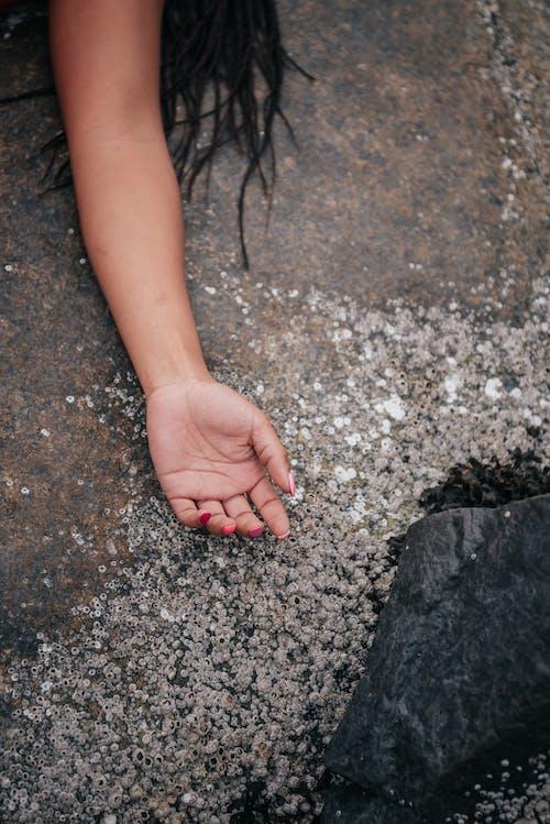 Kostnadsfri bild av fingrar, hand, närbild