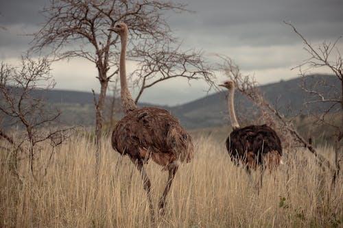 Immagine gratuita di animali, aves, fauna