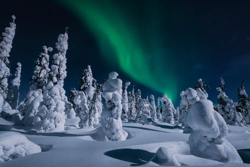Trees Covered in Snow Under Northern Lights