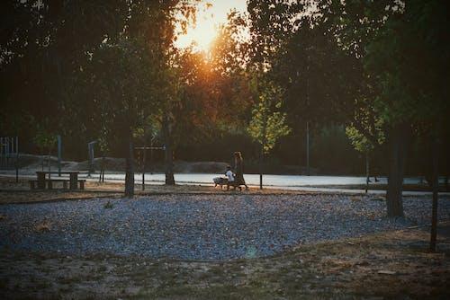 가을, 감기, 개 산책의 무료 스톡 사진