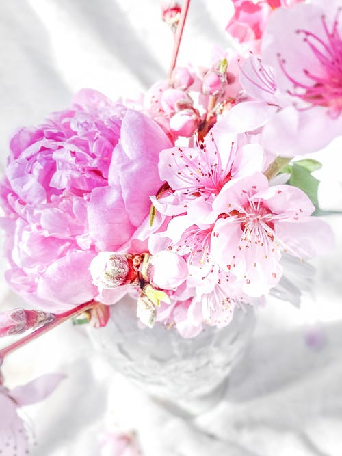 Close-Up Shot of Pink Flowers in a Vase