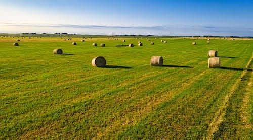 Foto d'estoc gratuïta de a l'aire lliure, agricultura, bala