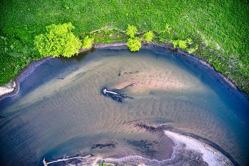 Foto d'estoc gratuïta de a l'aire lliure, aigua, bacteris