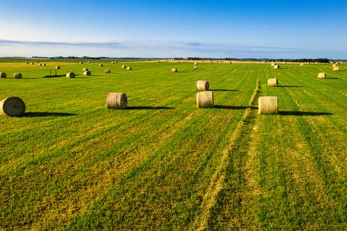Foto d'estoc gratuïta de a l'aire lliure, a pagès, agricultura