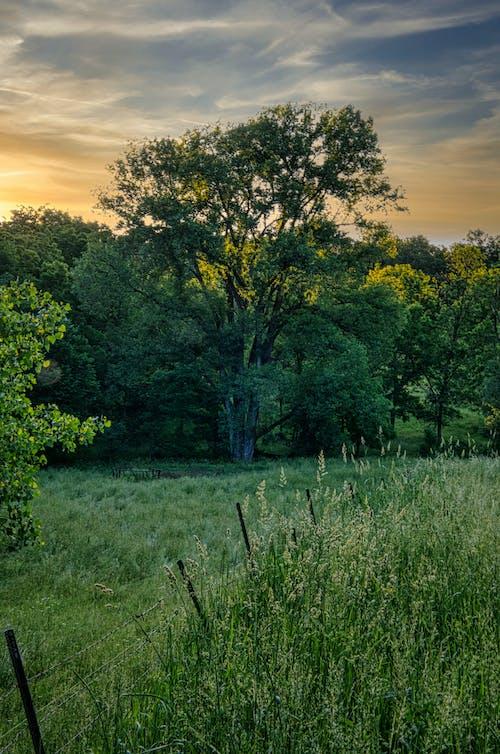 Foto d'estoc gratuïta de a pagès, alba, arbre