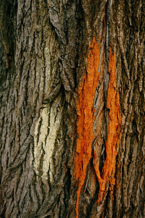Rough Texture of a Tree Bark