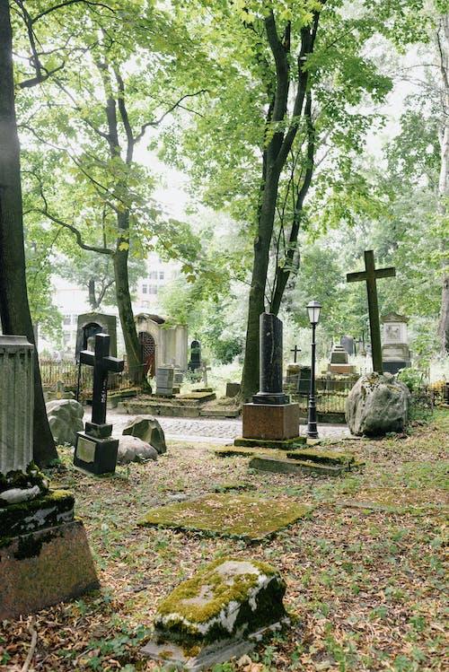 Gratis arkivbilde med begravelse, blad, falle