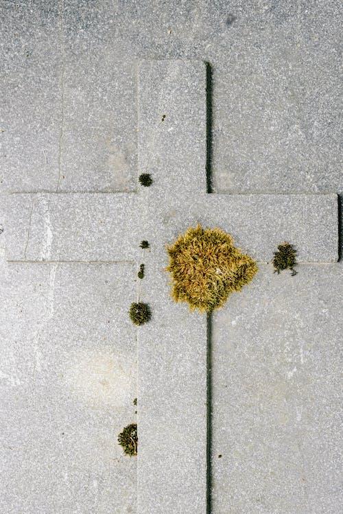 Fotobanka sbezplatnými fotkami na tému betónový odliatok, hrob, hrobka