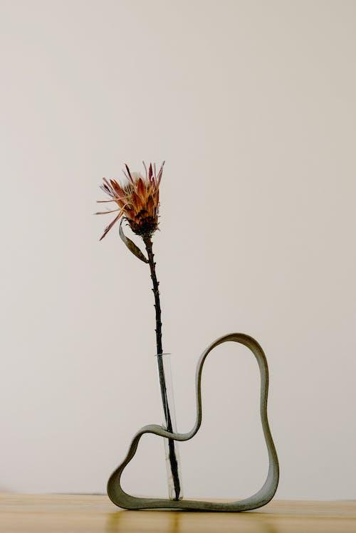 Fotobanka sbezplatnými fotkami na tému exteriéry, flóra, jednoduchosť