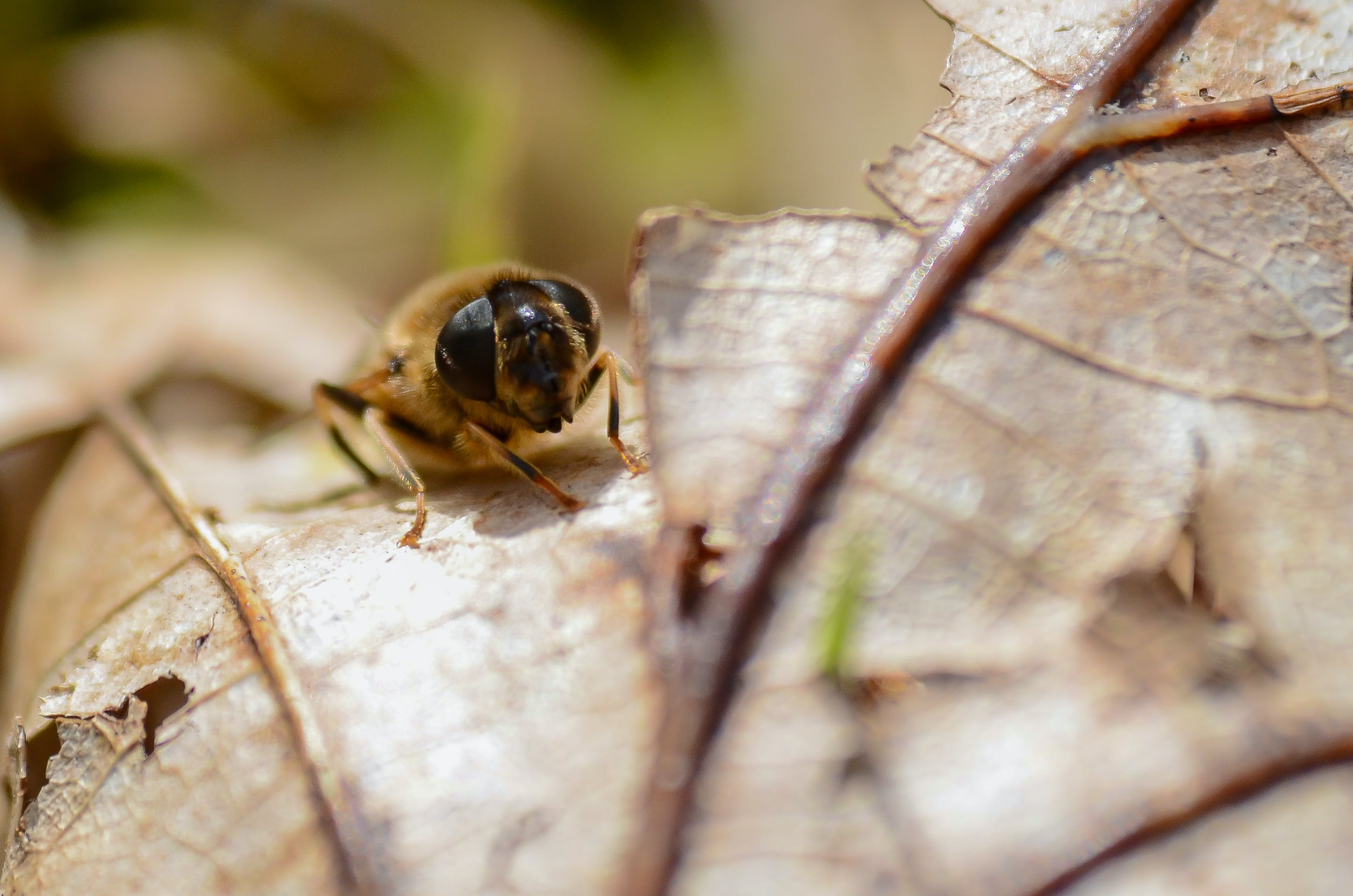 Bee on Brown Leaf
