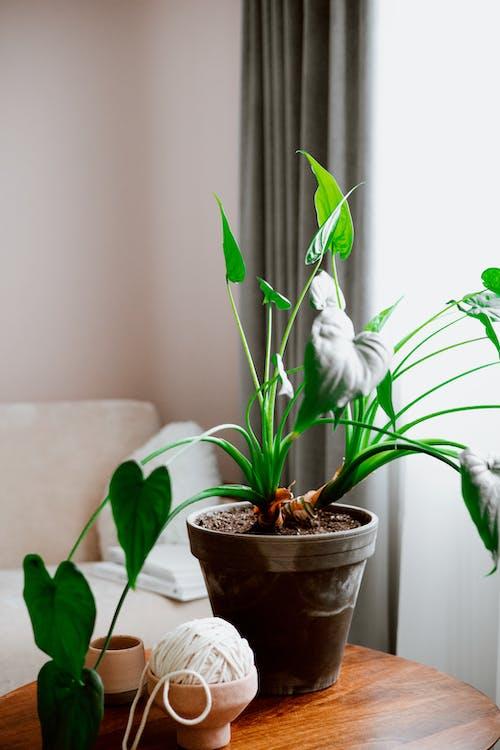 Indoor Plants in a Pot