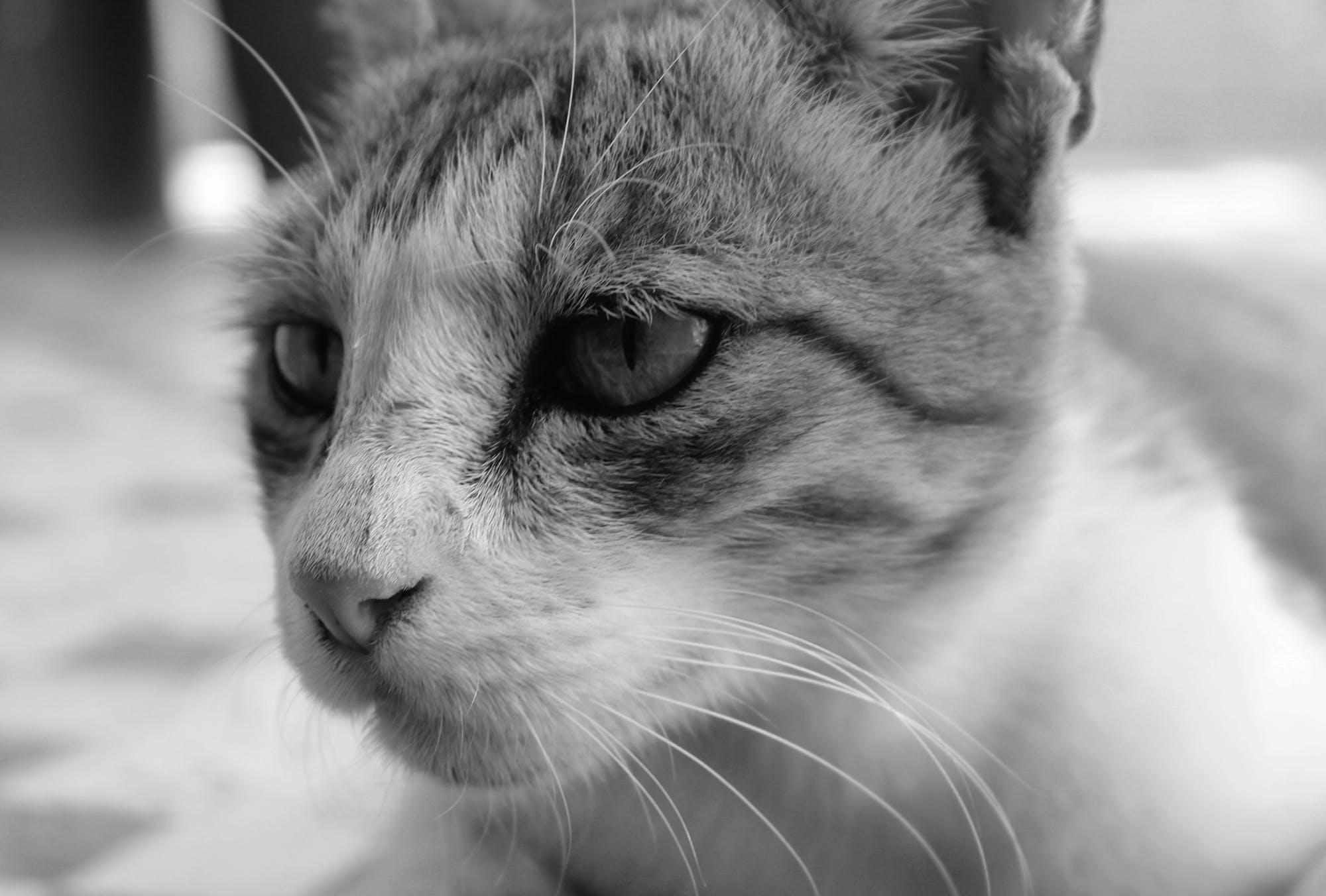 Fotobanka sbezplatnými fotkami na tému čierna a biela, dieťa mačka, mačka, oko