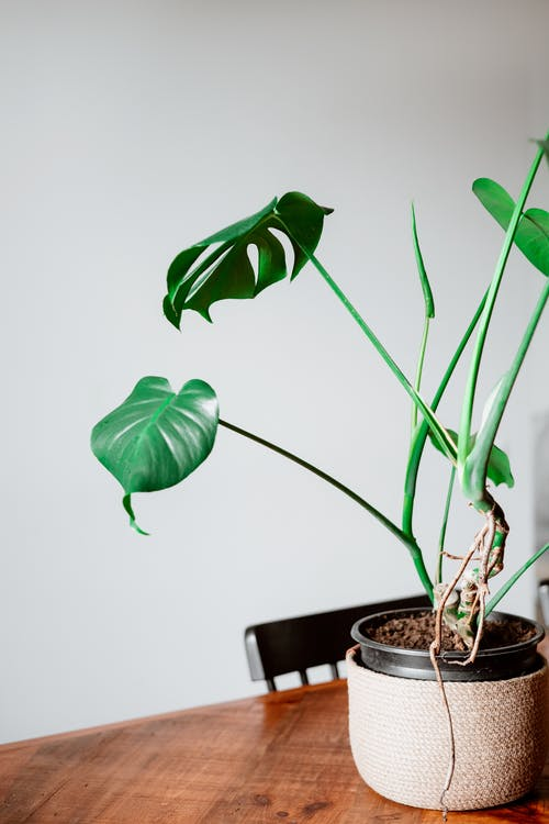 House Plant on a Wooden Table