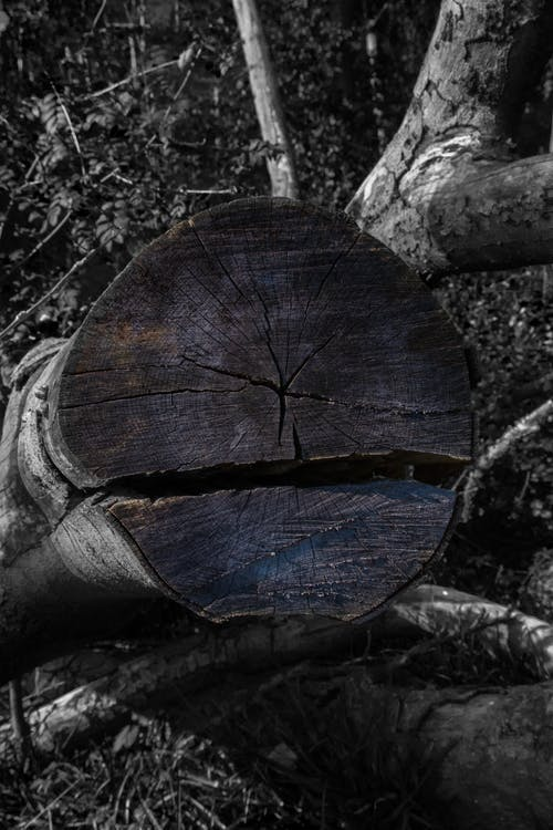 Free stock photo of black and white, carved wood, chopped wood, forest