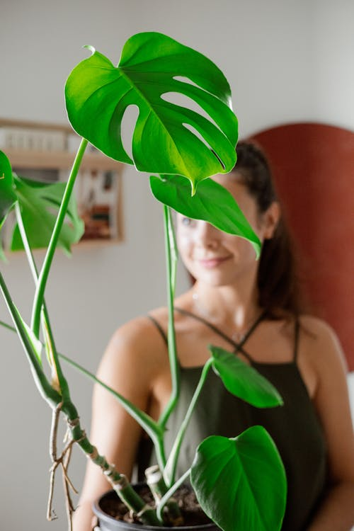 A Woman Holding a Plant with Green Leaves