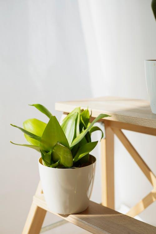 Darmowe zdjęcie z galerii z ceramiczny, drewno, fotografia roślin