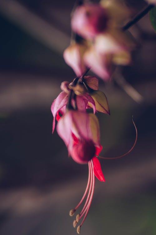 Δωρεάν στοκ φωτογραφιών με macro, nikon, εργοστάσιο, λουλούδι