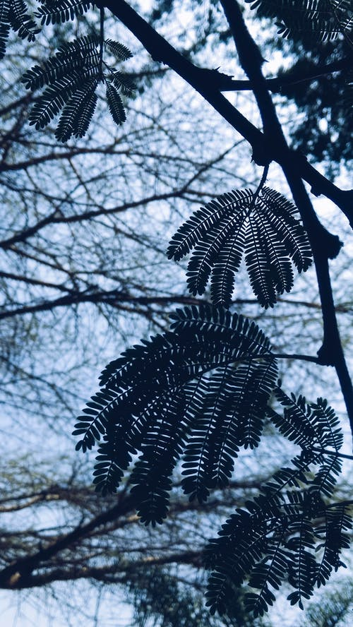 Δωρεάν στοκ φωτογραφιών με macro, nikon, Αφρική, δέντρα