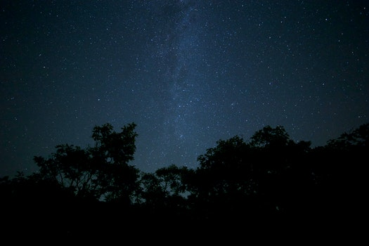 Free stock photo of nature, night, dark, forest
