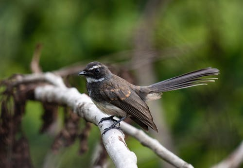 Brown and Black Bird on Tree Branch