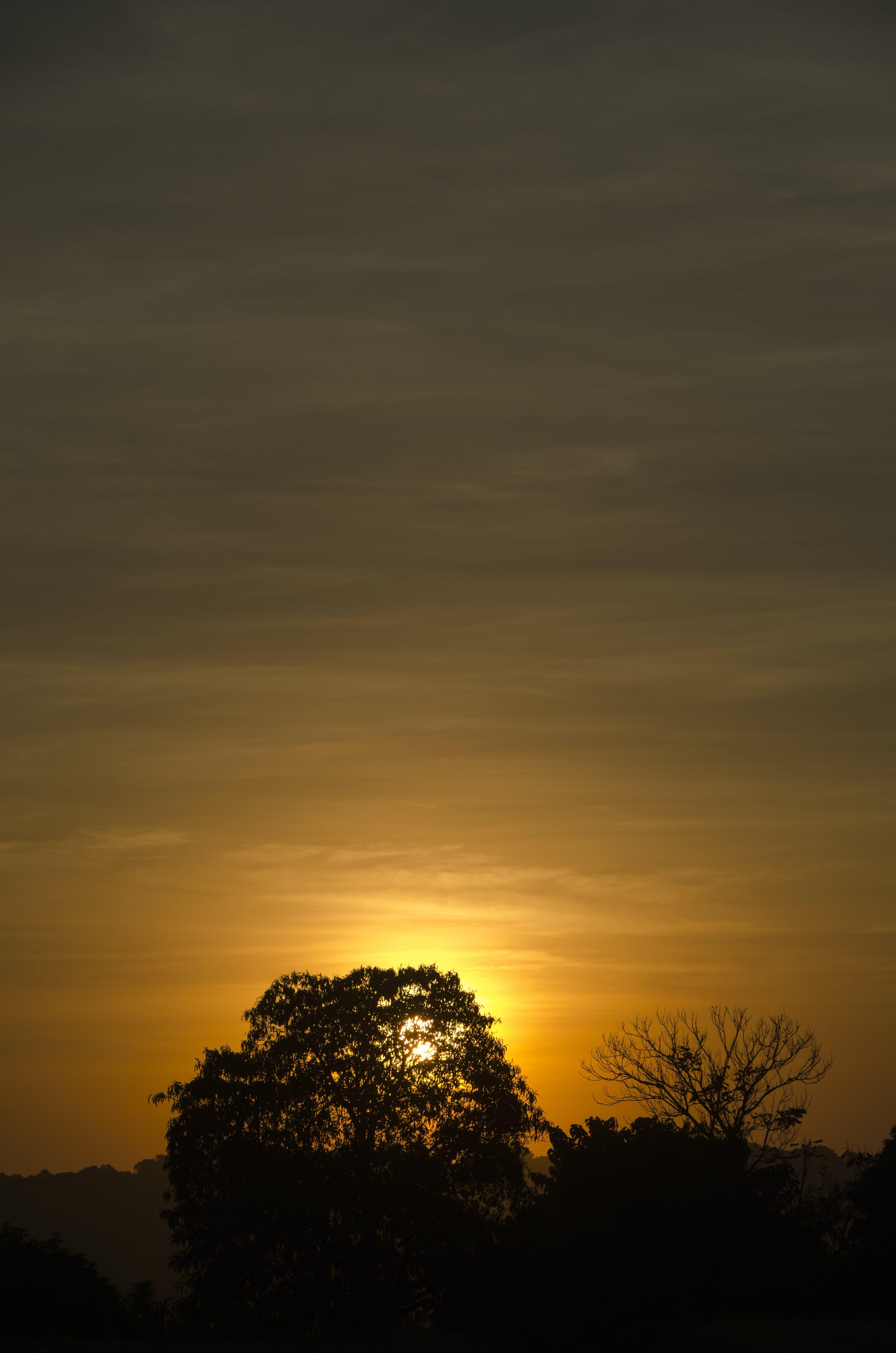Silhouette of Trees Against Orange Sun during Sunsset