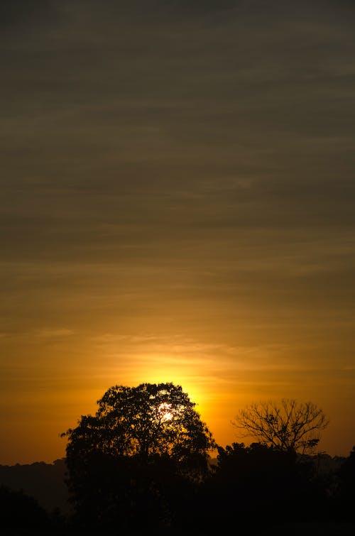 Ảnh lưu trữ miễn phí về bầu trời, bình Minh, cây, Hoàng hôn