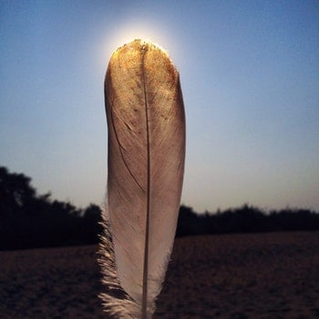 White Feather Close Up Photo