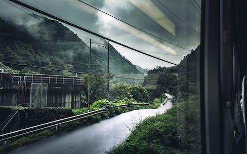 Green Trees and White Bridge
