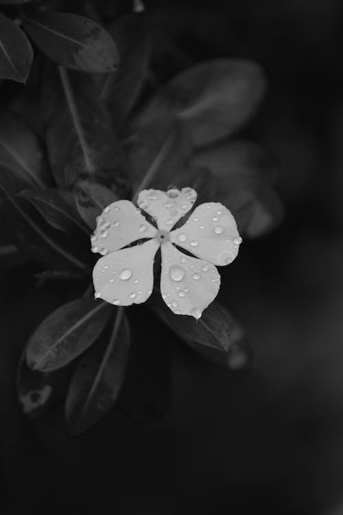 Free stock photo of black, black and white, moody