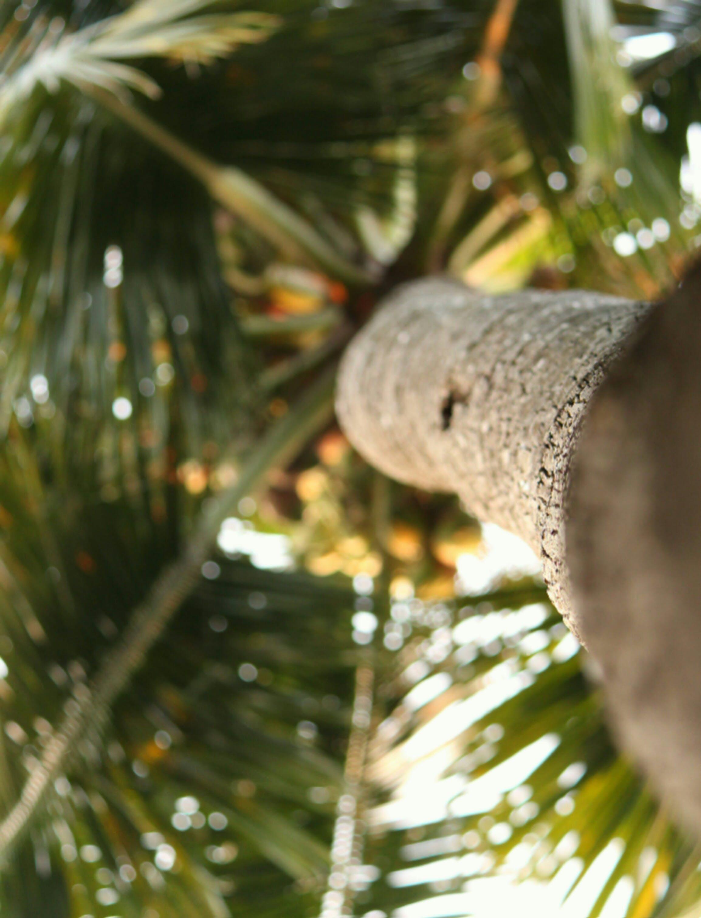 Kostenloses Stock Foto zu aufnahme von unten, baum, baumstamm, palme